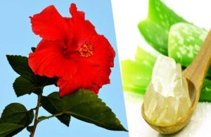 Hibiscus And Aloe Vera Gel - How To Use Aloe Vera For Hair Growth