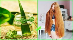 Apply aloe vera to stop dandruff-How To Use Aloe Vera For Hair Growth