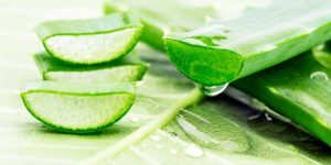 What Is Aloe Vera?- How To Use Castor Oil And Aloe Vera Gel For Hair Growth