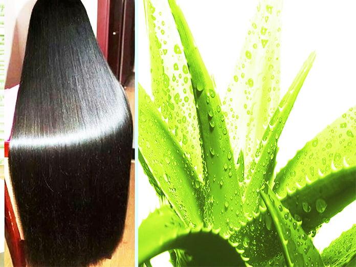 aloe vera gel hair growth - How to Use Castor Oil and Aloe Vera Gel for Hair Growth
