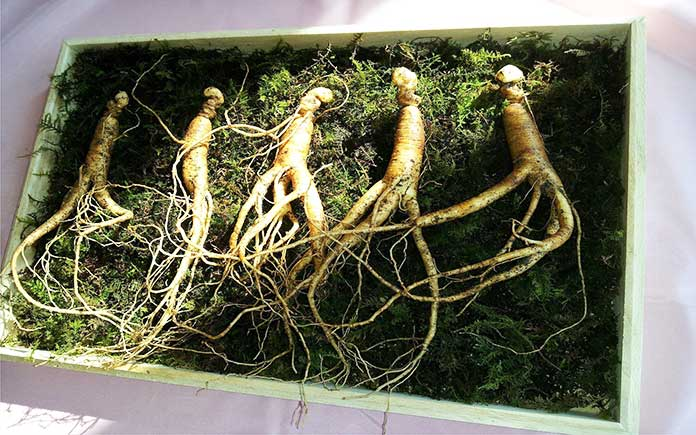 Ginseng - How To Boost Immune System When Sick - boost immune system fast