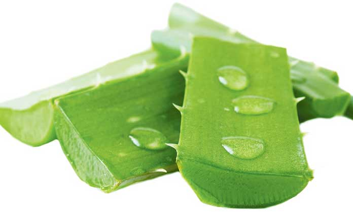 Aloe Vera - 7 Remedies For How To Get Rid Of Cold Sores On Lips Overnight