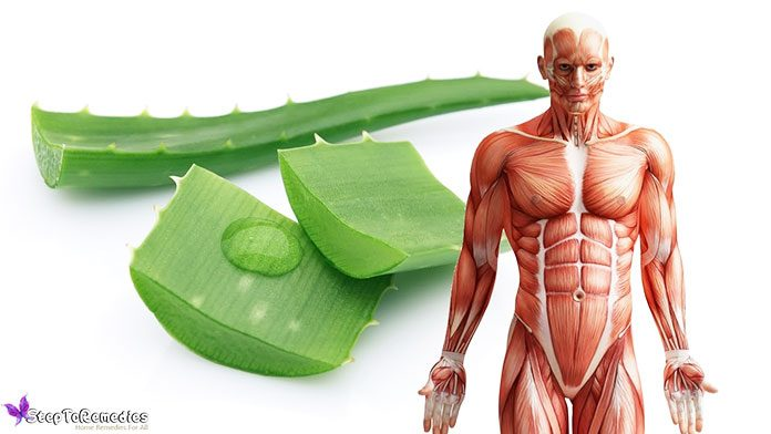 7 Benefits Of Aloe Vera On Face Overnight: How Do You Use Aloe Vera Face & Skin