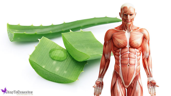 Benefits Of Drinking Aloe Vera Juice First Thing In The Morning