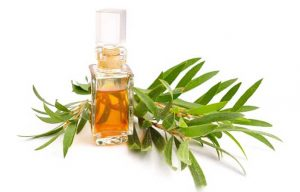 Tea Tree Oil - 7 Best Home Remedies For Get Rid Of Cold Sores Fast