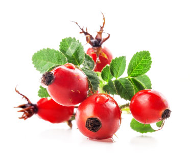 Rosehip Seed Oil - Benefits Of Rosehip Seed Oil For Skin