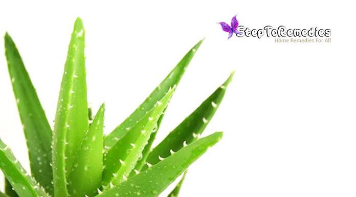 Unique Plant Aloe Vera: Medicinal Properties