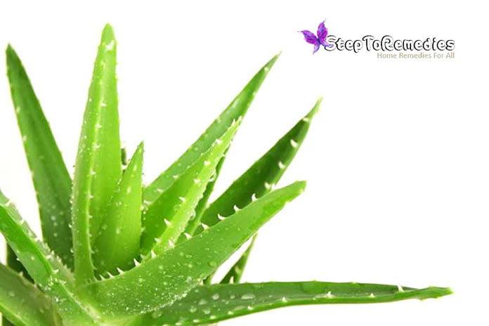Unique Plant Aloe Vera: Medicinal Properties