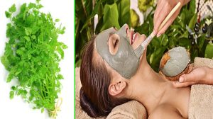 Face Mask For Acne Diy - Chervil For Acne - 11 Best Effective Face Mask For Oily Skin