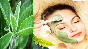 Sage Face Mask For Oily Skin - 11 Best Effective Face Mask For Oily Skin