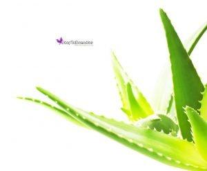 How To Apply Aloe Vera Gel