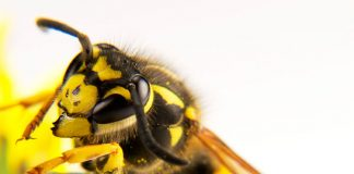 First Aid For Wasp Stings