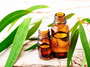 How To Use Eucalyptus Oil?
