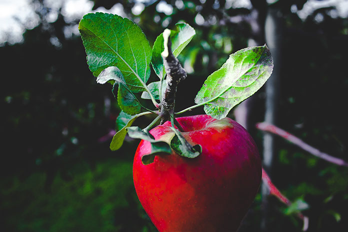 how-do-you-use-apple-cider-vinegar-for-weight-loss