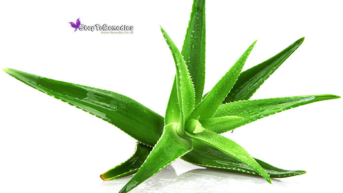 Aloe Vera Cleanser - 13 Best Natural Face Cleanser For Aging Skin